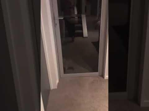 Katinas įsilaužė į namus