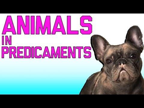 O gyvūnai visada juokingi