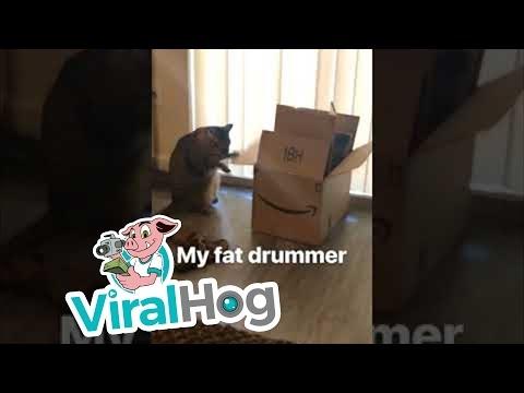 Katė - būgnininkė