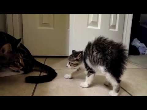 Kačiukai susipažįsta