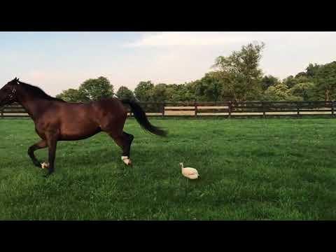 Arklys neša kanopas nuo mažo paukščio