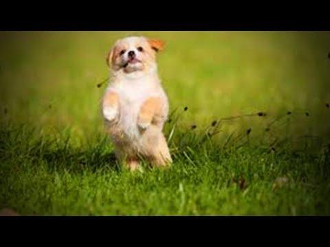 Mielų šuniukų video rinkinys