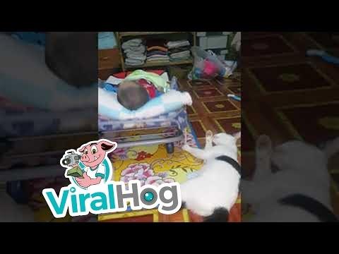 Pats geriausias katinas - multitaskeris