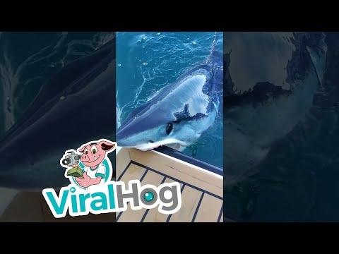 Ryklys priplaukė pasisveikinti
