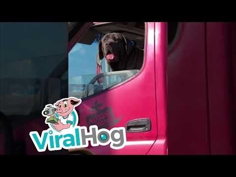 Maža mašina, didelis šuo