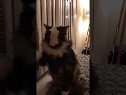 Katinas ir šlapenka