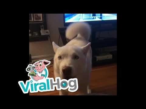 Šunytis nori skanėstų