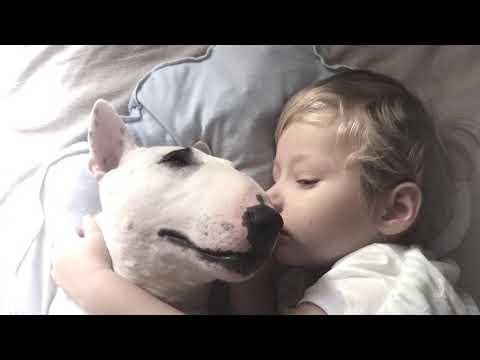Berniukas ir šuo miega kartu