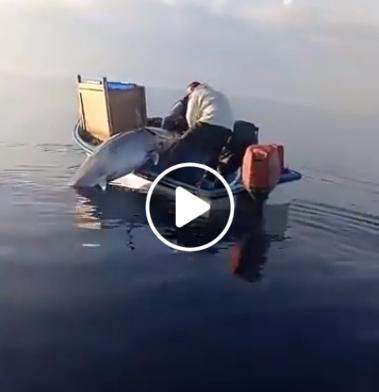 Didelė žuvis mažoje valtyje