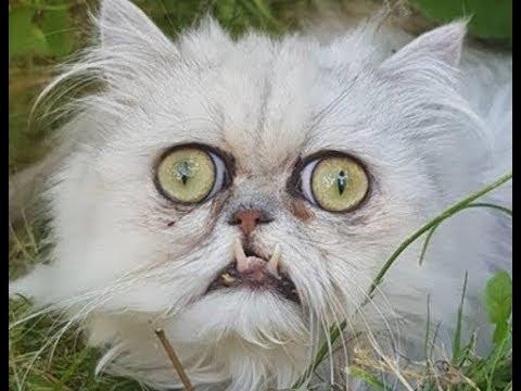 Baisiausias katinas pasaulyje?