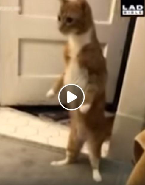 Katino reakcija į vonios bombą