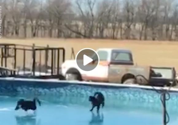 Katinai žaidžia ant užšąlusio vandens