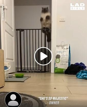 Katinas padaro magišką šuolį
