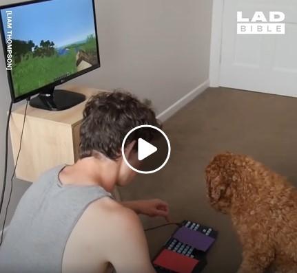Vaikinas išmoko savo šunį žaisti Minecraftą