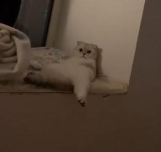 Katinas čilina ant palangės