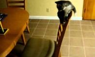 Mažas kačiukas (1 video)