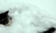 Kačių drakės sniege :D (1 video)