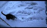 Katinas vs sniegas (1 video)