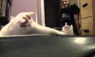 Katinai ir bėgimo takelis
