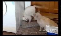 Kovinis katinas (Video)