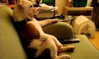 Šuo žiūri multikus