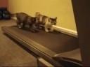 Net katės tai daro