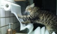 Eilinė katino diena