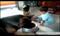 Šuo ir vaikas kovoja, kad išgyventų