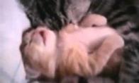 Kačiuko košmaras