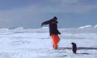 Negrasink pingvinui