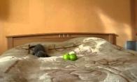 Mažas kačiukas kovoja su blogiu (siaubo filmas)