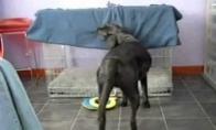 Savarankiškas šunelis
