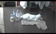 Paranoiškas katinas