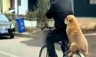 Šuo ant dviračio