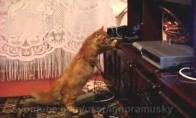 Katinas prieš Blu-Ray grotuvą