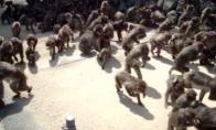 Beždžionių apokalipsė