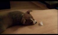 Šuniukas prieš šaltą nežinomą objektą