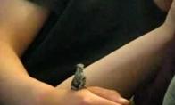 Išgelbėtas kolibris