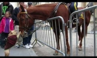 Šuo sutiko arklį