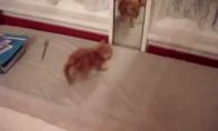 Kačiukas ir veidrodis