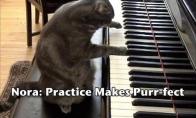 Labai pūkuotas pianistas