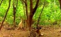 Beždžionė lenda prie vaikų