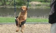 Šuo linksminasi ant supynių