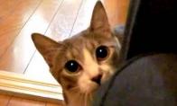 Sėlinantis katinukas