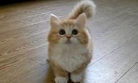 Nežemiško mielumo kačiukas