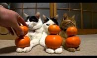 Trys abejingos katės