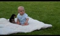 Jorkas žaidžia su mažyliu