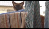 Super-katinas į pagalbą