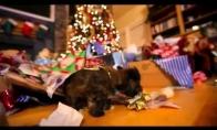 Maži šuneliai knaisiojasi dovanose