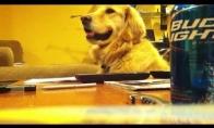 Šunelis Auksius myli gitarą